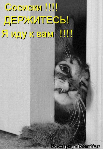 Котоматрица: Сосиски !!!!  ДЕРЖИТЕСЬ! Я иду к вам  !!!!