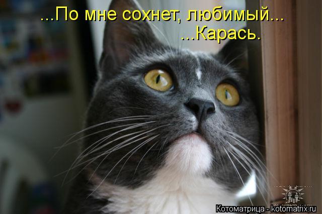 Котоматрица: ...По мне сохнет, любимый... ...Карась.