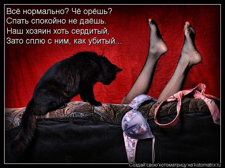 Котоматрица: Всё нормально? Чё орёшь? Спать спокойно не даёшь. Наш хозяин хоть сердитый,  Зато сплю с ним, как убитый...