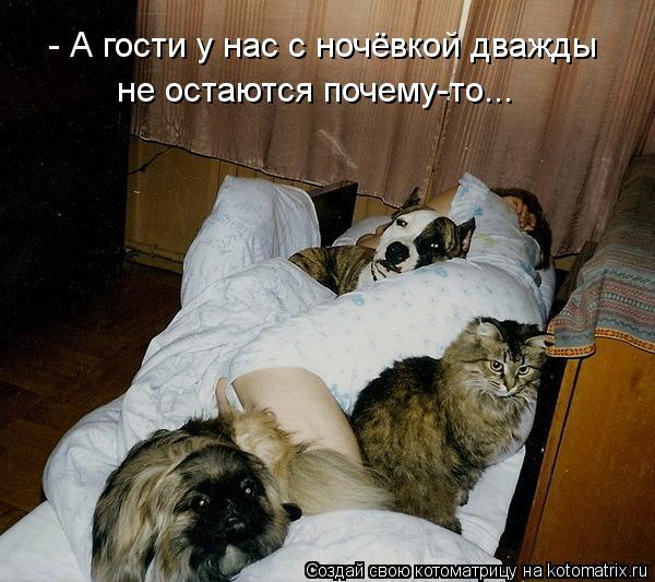Котоматрица: - А гости у нас с ночёвкой дважды не остаются почему-то...