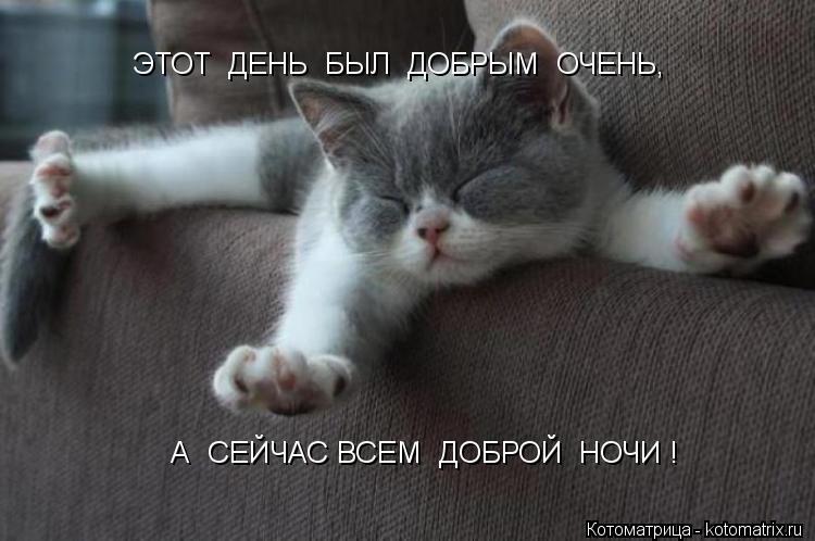 kotomatritsa_wA.jpg