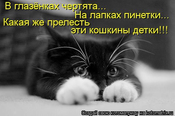 Котоматрица: В глазёнках чертята... Какая же прелесть эти кошкины детки!!! На лапках пинетки...