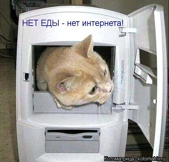 Котоматрица: НЕТ ЕДЫ - нет интернета!