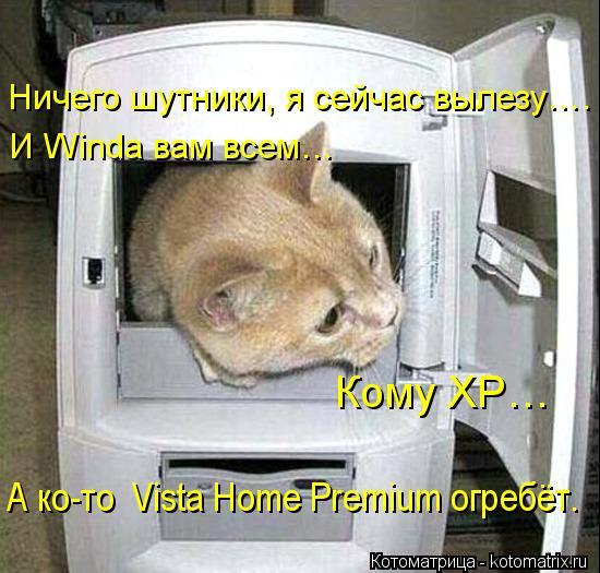 kotomatritsa_Hw.jpg