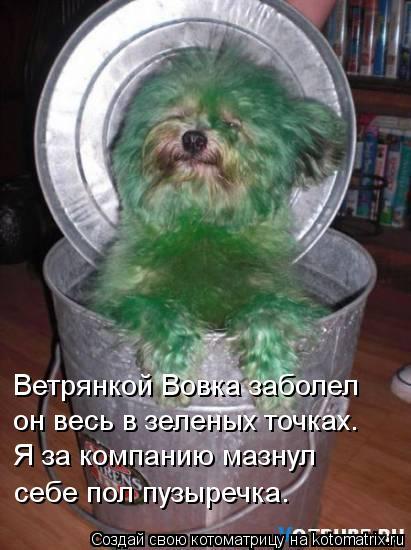Котоматрица: Ветрянкой Вовка заболел он весь в зеленых точках. Я за компанию мазнул себе пол пузыречка.