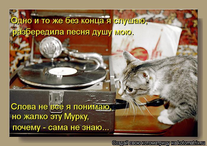 Котоматрица: Слова не все я понимаю, но жалко эту Мурку, почему - сама не знаю... Одно и то же без конца я слушаю,  разбередила песня душу мою.