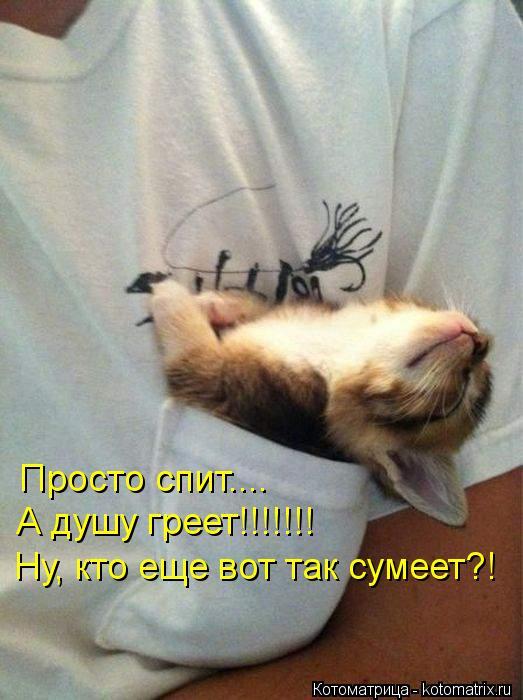Котоматрица: Просто спит.... А душу греет!!!!!!! Ну, кто еще вот так сумеет?!