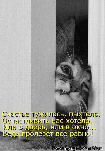 Котоматрица: Счастье тужилось, пыхтело. Осчастливить нас хотело. Ведь пролезет все равно! Или в дверь, или в окно...