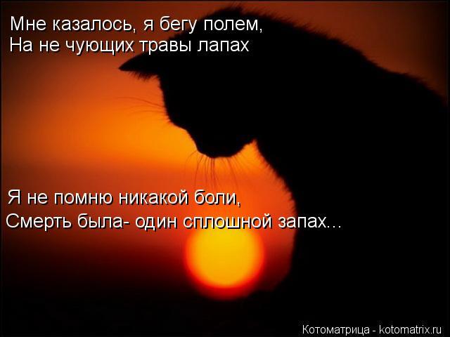 Котоматрица: Мне казалось, я бегу полем, На не чующих травы лапах Я не помню никакой боли, Смерть была- один сплошной запах...