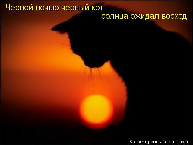 Котоматрица: Черной ночью черный кот солнца ожидал восход.