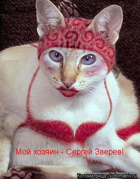 Котоматрица: Мой хозяин - Сергей Зверев!