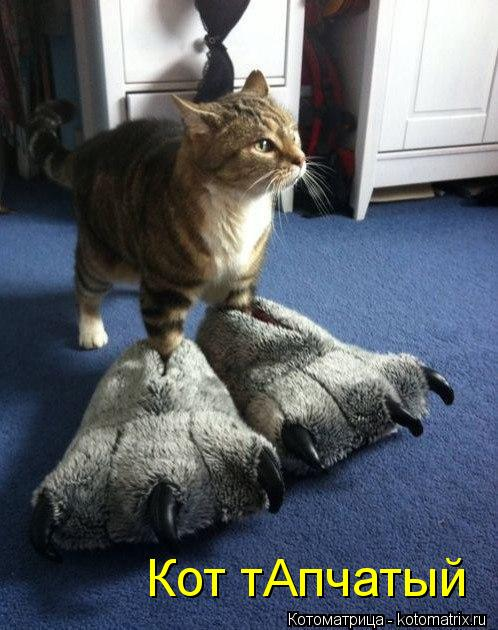 Котоматрица: Кот тАпчатый