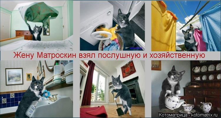 Котоматрица: Жену Матроскин взял послушную и хозяйственную