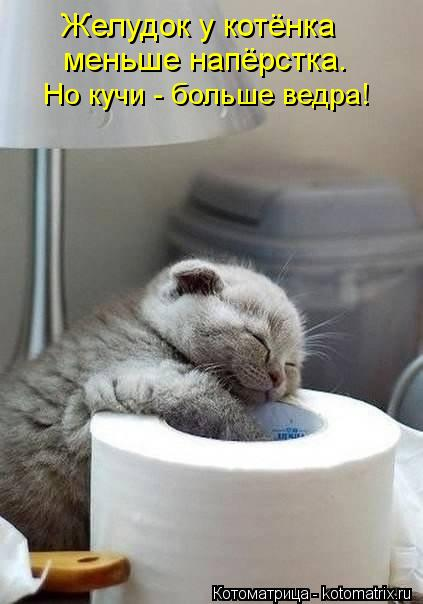 Котоматрица: Желудок у котёнка меньше напёрстка. Но кучи - больше ведра!