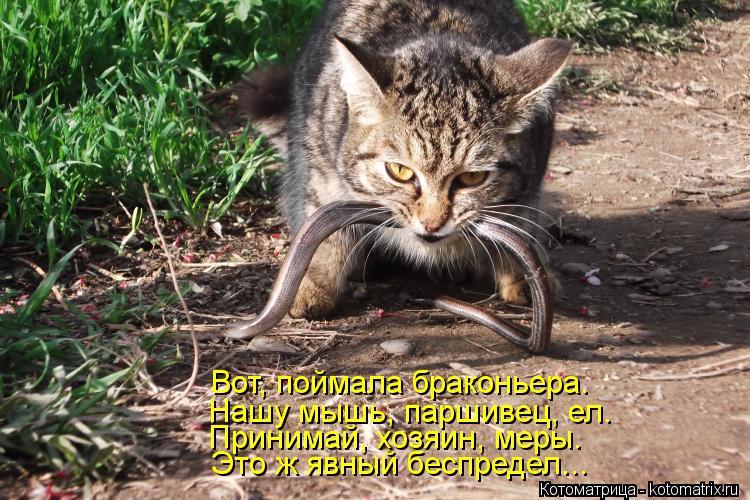 Котоматрица: Это ж явный беспредел... Принимай, хозяин, меры. Нашу мышь, паршивец, ел. Вот, поймала браконьера.