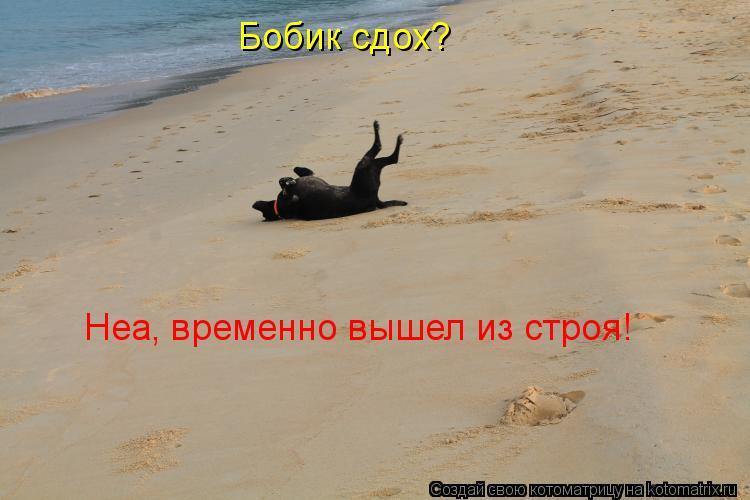 http://kotomatrix.ru/images/lolz/2013/07/03/kotomatritsa_AW.jpg