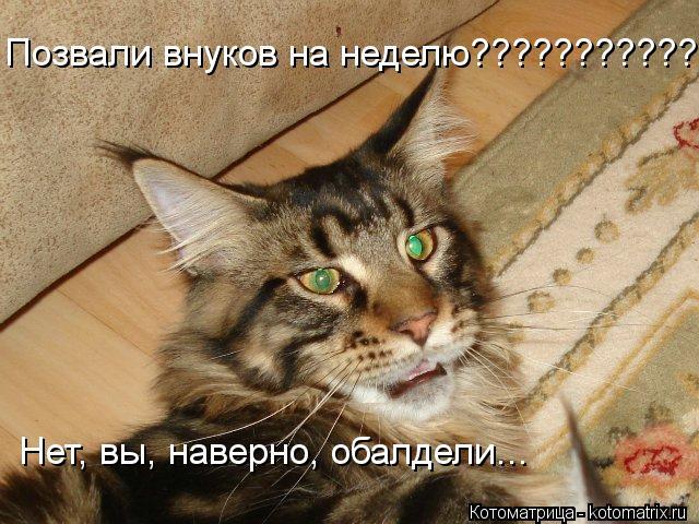 kotomatritsa_HP.jpg