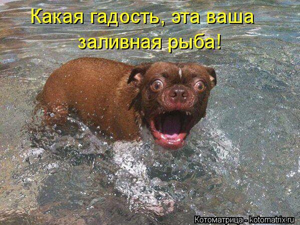 Котоматрица: Какая гадость, эта ваша заливная рыба!