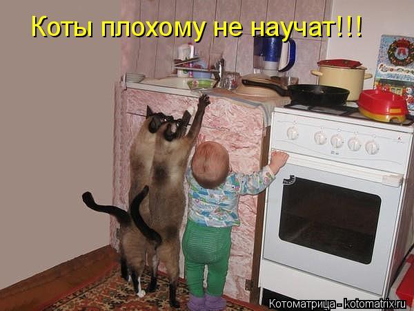 kotomatritsa_JV.jpg