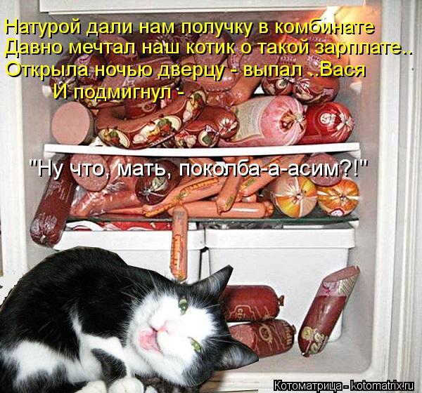 """Котоматрица: Натурой дали нам получку в комбинате Давно мечтал наш котик о такой зарплате..  """"Ну что, мать, поколба-а-асим?!"""" Открыла ночью дверцу - выпал ..В"""