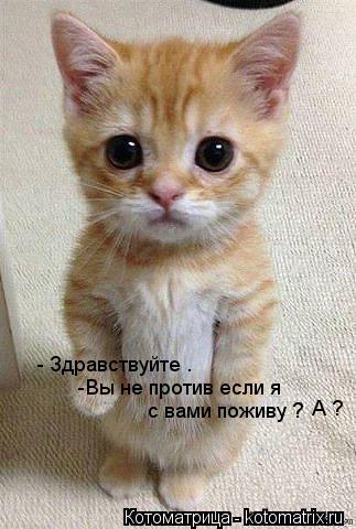 kotomatritsa_Wq.jpg