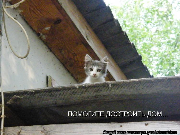 kotomatritsa_bB.jpg