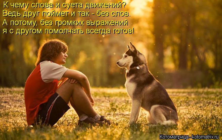 Котоматрица: К чему слова и суета движений?  Ведь друг поймет и так - без слов.  А потому, без громких выражений  я с другом помолчать всегда готов!