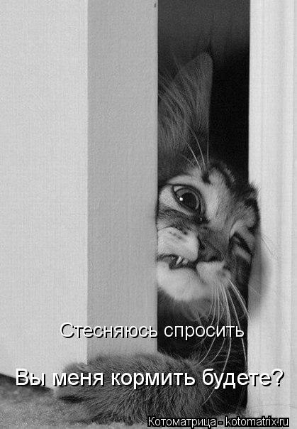Котоматрица: Стесняюсь спросить Вы меня кормить будете?