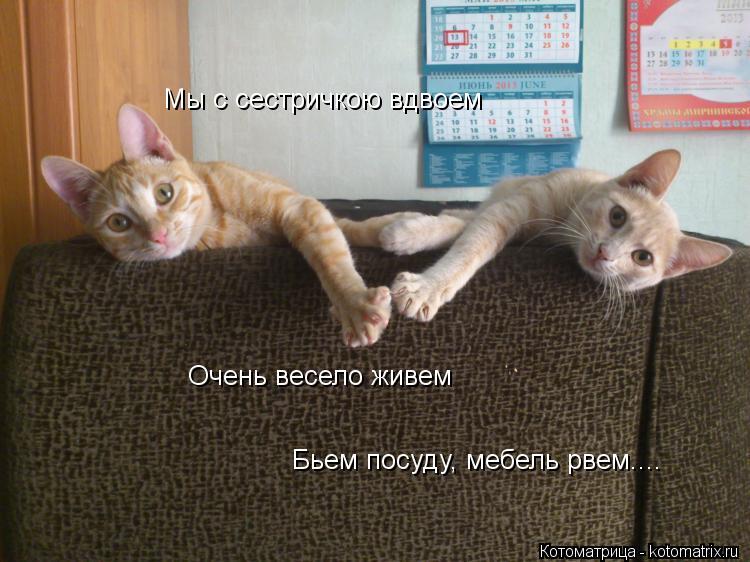 kotomatritsa_s.jpg