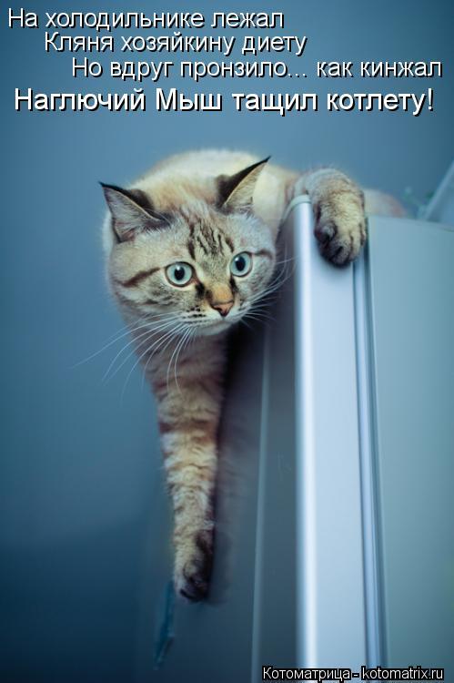 Котоматрица: На холодильнике лежал   Кляня хозяйкину диету Но вдруг пронзило... как кинжал Наглючий Мыш тащил котлету!
