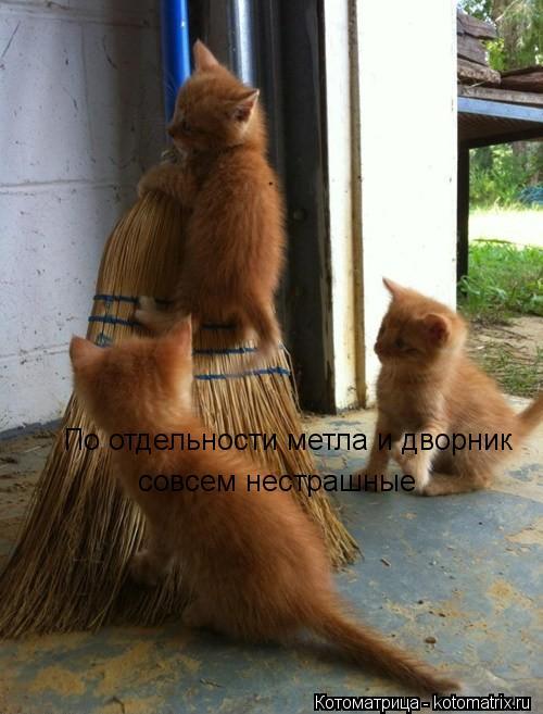 kotomatritsa_y1.jpg