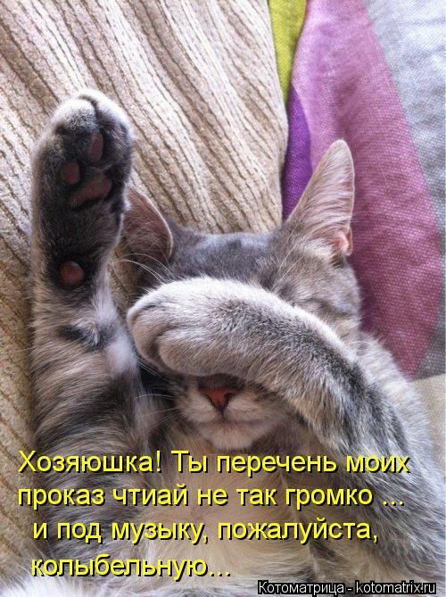 kotomatritsa_6K.jpg
