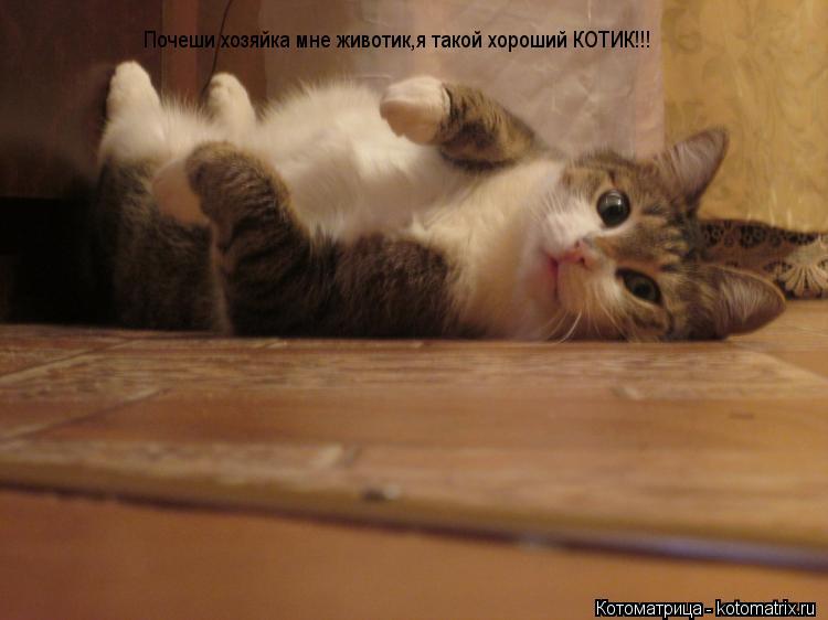 kotomatritsa_6O.jpg
