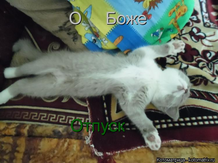 kotomatritsa_89.jpg