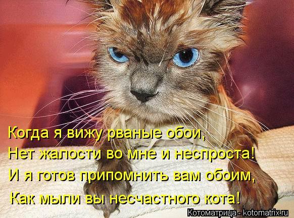 Котоматрица: Когда я вижу рваные обои, Нет жалости во мне и неспроста! И я готов припомнить вам обоим, Как мыли вы несчастного кота!