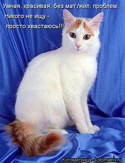 kotomatritsa_OG.jpg