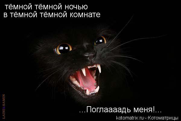 kotomatritsa_R.jpg