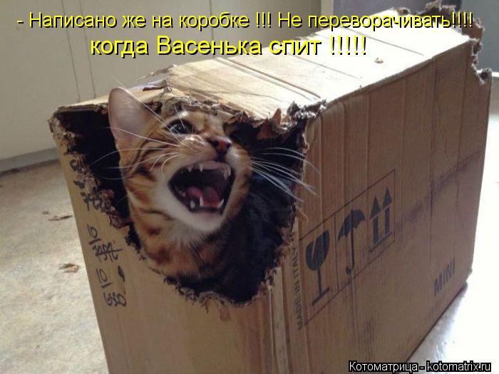 Котоматрица: - Написано же на коробке !!! Не переворачивать!!!! когда Васенька спит !!!!!
