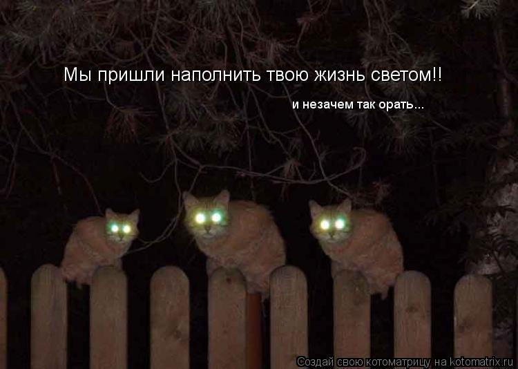 kotomatritsa_Y.jpg