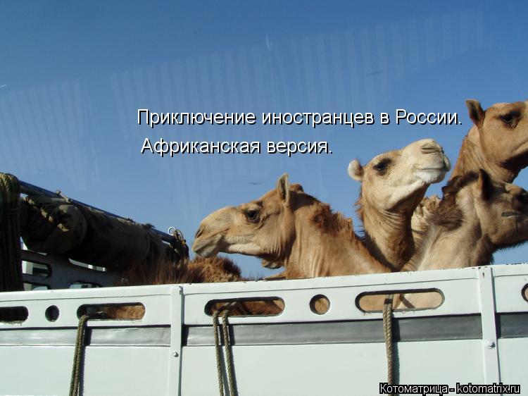 Котоматрица: Приключение иностранцев в России. Африканская версия.