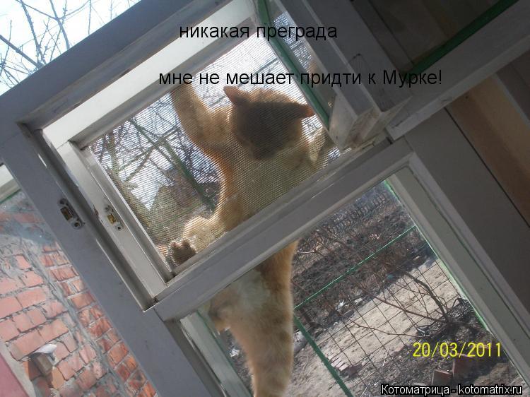 kotomatritsa_ea.jpg
