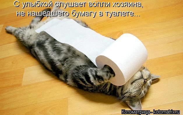 kotomatritsa_rW.jpg