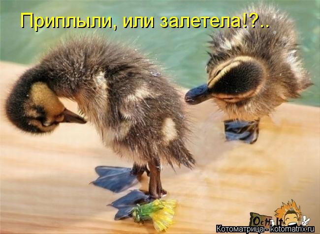 Котоматрица: Приплыли, или залетела!?..