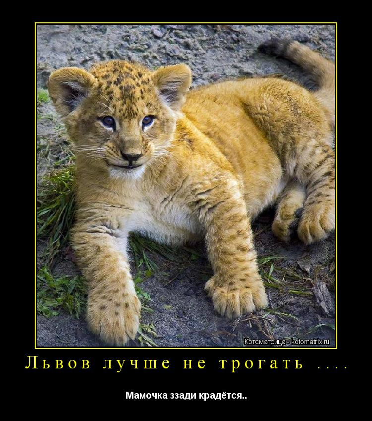Котоматрица: Львов лучше не трогать .... Мамочка ззади крадётся..