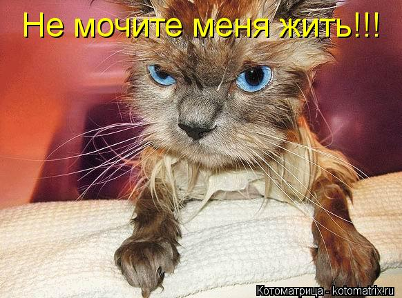 Котоматрица: Не мочите меня жить!!!