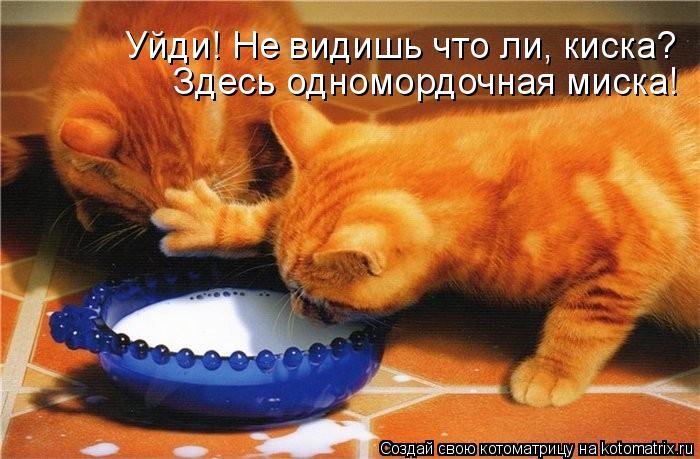 Котоматрица: Здесь одномордочная миска! Уйди! Не видишь что ли, киска?