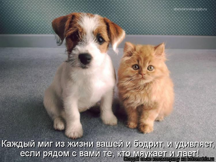 Котоматрица: Каждый миг из жизни вашей и бодрит, и удивляет, если рядом с вами те, кто мяукает и лает!