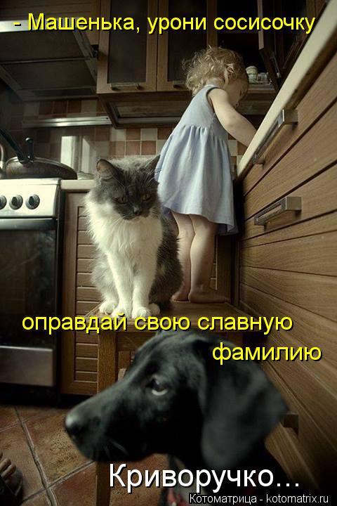 Котоматрица: - Машенька, урони сосисочку оправдай свою славную  фамилию Криворучко...
