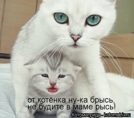 Котоматрица: от котёнка ну-ка брысь, не будите в маме рысь!