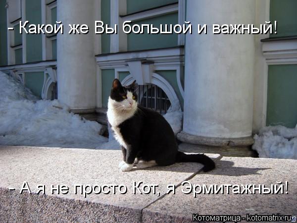 Котоматрица: - Какой же Вы большой и важный!  - А я не просто Кот, я Эрмитажный!